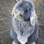 konijn2